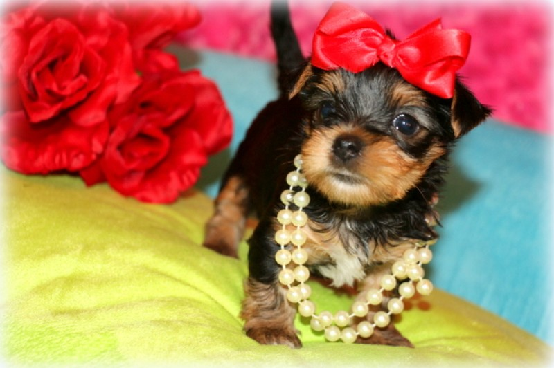Izzy Belle *Reserved/Unavailable!