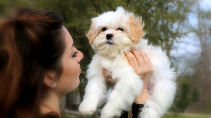 Questions to ask yourself before adding a new puppy to your home