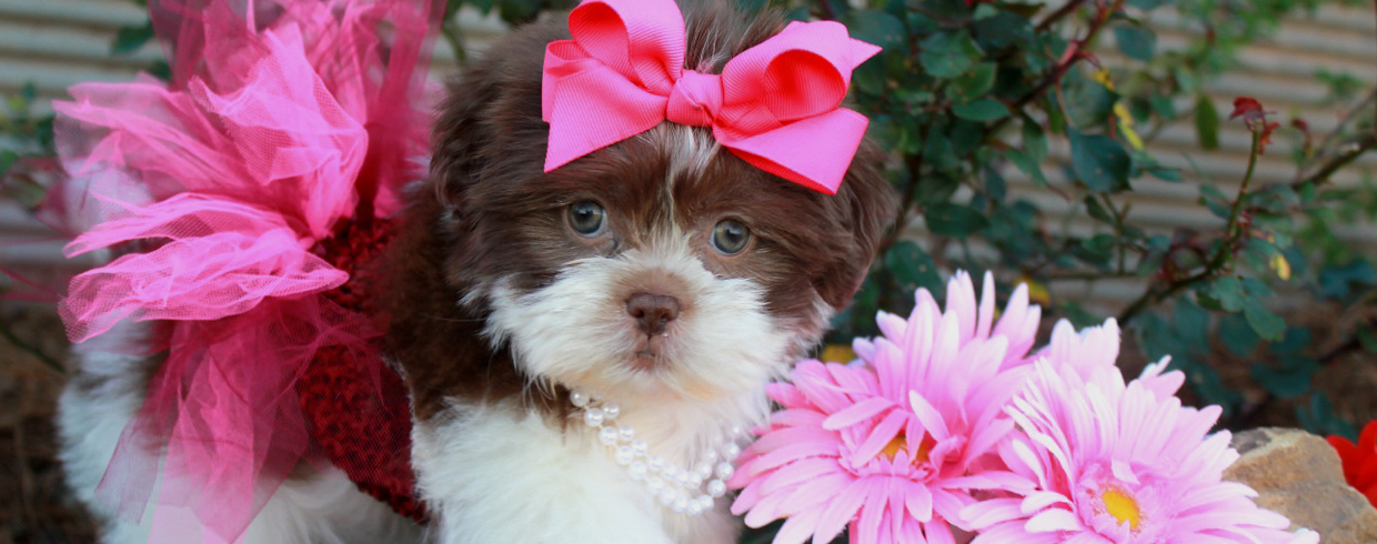 Princess Puppies Boutique